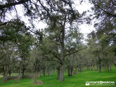 La Fuentona y el Sabinar de Calatañazor; viajes de senderismo marzo;senderismo nivel bajo